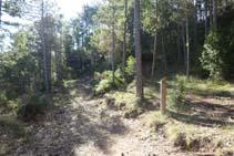 Trencall: deixem un camí ample i enfilem per un corriol que avança per entre pins.