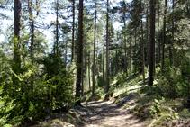 Bosc de l´Obaga.