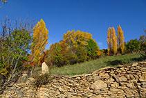 Mur de pedra seca i prat amb pollancres.
