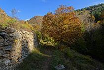 Mur de pedra seca i noguera.