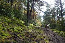 Tram de camí pel bosc, molt agradable.
