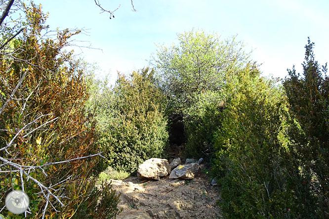 La cova d