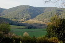 L´alzinar a la vall de Llémena.