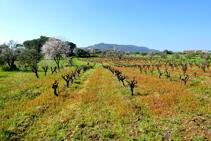 El paisatge de la plana calongina.