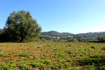Paisatge agroforestal.