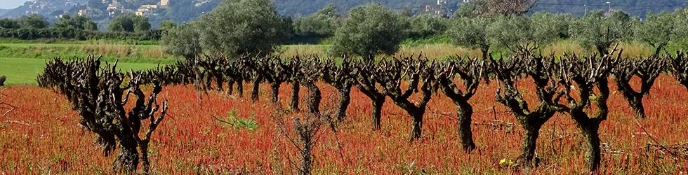 Puig Cargol i la plana calongina