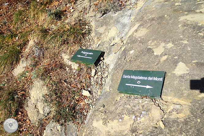 Puigsacalm (1.515m) i Puig dels Llops (1.486m) des de Joanetes 1