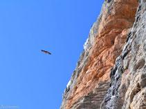 Durant el recorregut veiem molts voltors volant prop de les parets