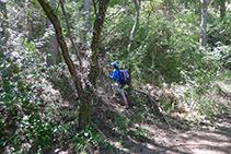 Corriol que s´endinsa al bosc: és el camí que puja cap a la Roca del Corb.