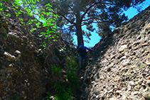 Canaleta que ens porta fins al collet que hi ha entre l´Agulla del Corb i la Roca del Corb.