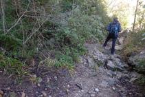 Avancem per un terreny pedregós on hi domina el boix.