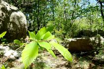 Boscos de castanyer i blocs de granit.