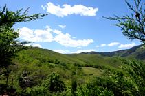 Boscos del massís de les Salines.