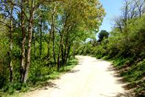 Camí de Les Illes al coll de Manrella.