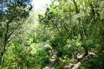 Camí a La Vajol.
