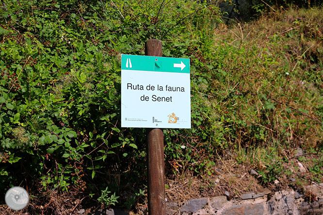 Ruta de la fauna de Senet 1