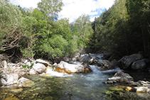 Riu de Sant Nicolau, hàbitat natural de la llúdriga (encara que és molt difícil poder-ne veure).
