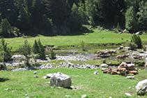 Ramat de vaques pasturant al planell de Sant Esperit.
