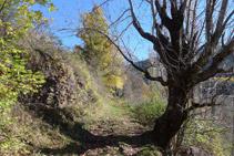 Durant l´itinerari ens trobem roures, oms, verns, aurons,... i d´altres espècies típiques de la vegetació de mitja muntanya.