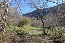 Arribem al fons de la vall i ens trobem el trencall de la font de Canemassos.
