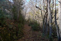 Seguim els senyals grocs que hi ha pintats en arbres i pedres.