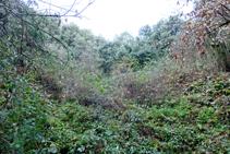Pedrera de l´Esquei d´en Pujol, coberta per la vegetació.