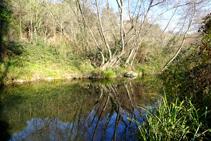 Vegetació de ribera al riu Brugent.