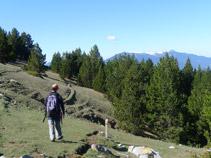 El corriol avança pel vessant de la muntanya.