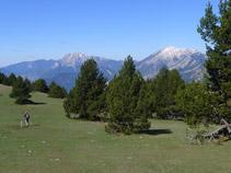 Prat alpí amb el Pedraforca (2.497m) al fons.