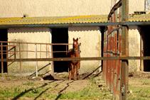 Centre Hípic de Vidreres.
