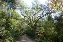 El bosc dels pantans d´en Llobet.