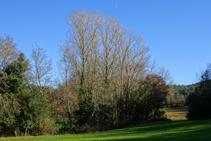 Bosc de ribera a la riera d´en Llobet.