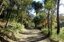 Camí entremig del bosc de suro.