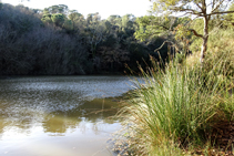 Vegetació de ribera al pantà d´en Llobet.