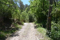 Tram per pista. Seguim els senyals grocs que hi ha pintats en algunes pedres i arbres.