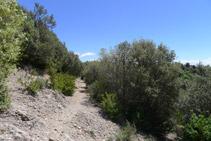 Camí de baixada cap a Sant Maurici de la Quar.