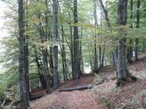 Bosc frondós al costat del Saut deth Pish.