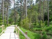 Sender accessible del Cornato a la vall de Pineta