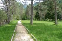 Avancem en direcció SE a través d´un bosc de pins.