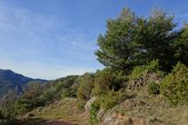 Boscos de pi roig a la serra de Puig d´Estela.