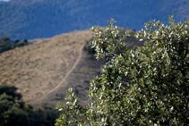 Una carrasca emmarca el bonic tram carener de la serra Seca.