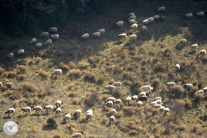 Serra Seca i el Pla de les Guàrdies des de Cambrils 1