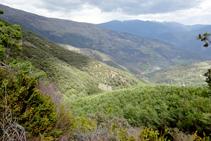El bosc de Tolzó i la muntanya d´Estac.