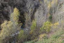 Bonic bosc de ribera a les profunditats de la vall.