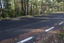 Marca de pintura groga en un pi a l´altra banda de la carretera.