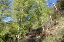 Bedolls camí a Sant Serni.