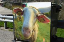 Simpàtica fotografia d´una ovella a la cruïlla de Sant Martí.