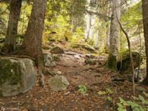 Pugem pel mig del bosc de l´Artiga de Lin.