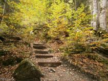 El sender està ben mantingut amb troncs de fusta que fan d´escales.