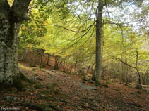 Caminem per entre el bosc tot fent una lleugera pujada.